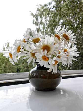 chamomile tea: illustration of  daisies bouquet  in ceramic vase on the window