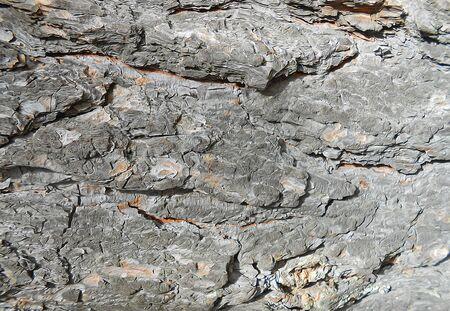 bark: abstract  background, pine bark dark