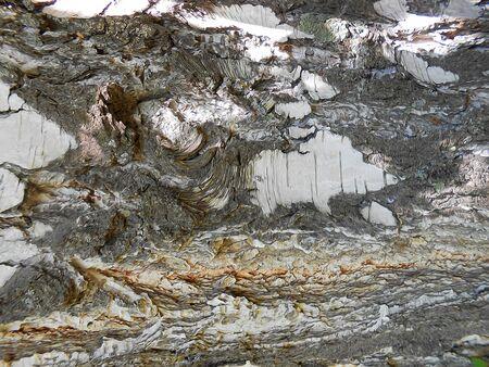 bark: abstract  background, Birch bark dark