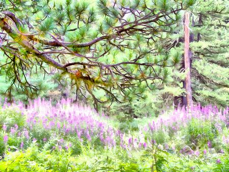 undisturbed: Where no man has gone before; reserved land; Altai Mountains.; Clean streams; creeks and rivers; tall; slender trees; plantation of medicinal herbs; fresh air and undisturbed; pristine nature. Illustration;