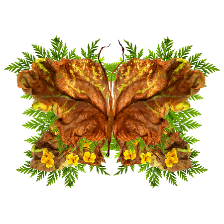 floral butterfly made of bizarre curved extruded dried lily petals. yellow celandine pressed flowers and dried up a huge crumpled brown with golden and green-veined leaves of poplar Stock Photo