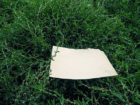 burnt paper: old burnt paper on the emerald green grass vintage
