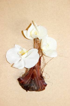 Bouquet Of Orchids In A Vase Made Of Palm Peel Onions Stock Photo