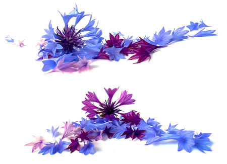 an inflorescence: photo manipulation oil paint  blue cornflower perspective,  delicate flowers and petals isolated on white background