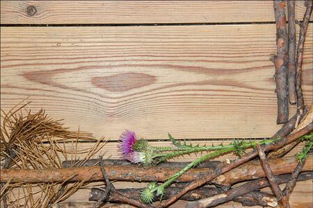prickly flowers: decoration composition on wooden background. Top view of  boards lined made of fir branches, violet-pink flowers of prickly thistle with place for your text