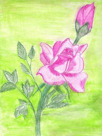 pastel drawing: pastel drawing of pink rose on green