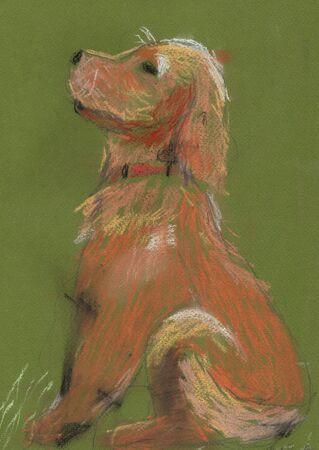 pastel drawing: childs pastel drawing orange Setter dog Stock Photo