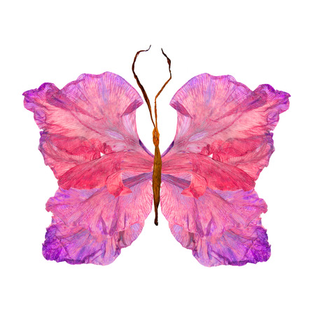 floral butterfly made from bizarre curved extruded dried lily petals dry gladiolus flower Stock Photo