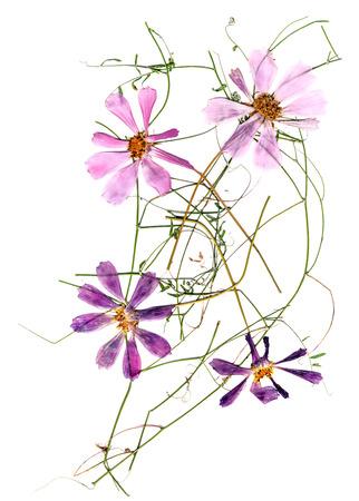 application, a bouquet of dried pink flowers Akroklinum