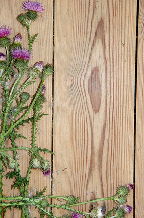 prickly flowers: Decoration composition on wooden background. Top view of  boards lined made of violet-pink flowers of prickly thistle with place for your text Stock Photo