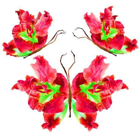 floral butterfly made from bizarre curved extruded dried lily petals dry iris flower