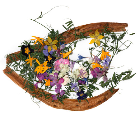 application, a bouquet of dried pressing bright flowers and small delicate  sweet peas, yellow celandine, multicolor royal Aquilegia, Columbine flower,  long stiff brown iris leaves in the form of eye
