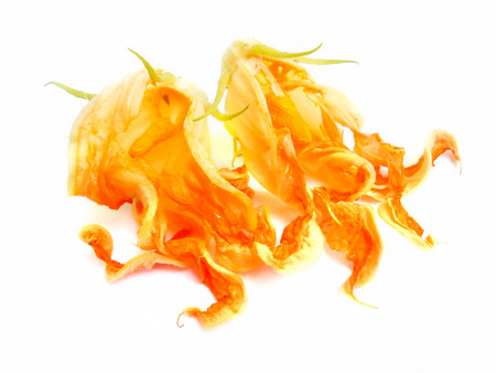 painting of fried zucchini flowers photo manipulating concept