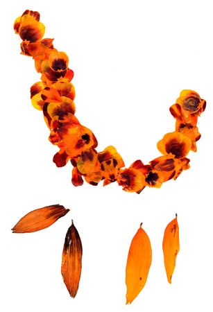 Transparent dried pressed orange mottled with brown and black spots marigold petals  curves squiggles Stock Photo