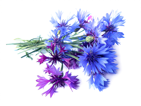 photo manipulation oil paint blue cornflower perspective, delicate flowers and petals isolated on white background Stock Photo