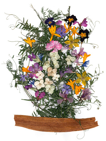 application, a bouquet of dried pressing bright flowers and small delicate  sweet peas, yellow celandine, multicolor royal Aquilegia, Columbine flower,  on the long stiff brown iris leaves Stock Photo