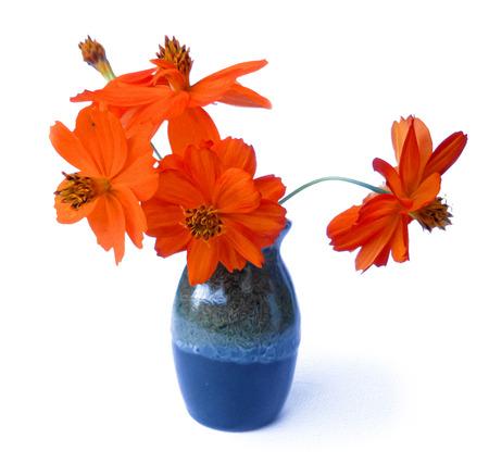 red purslane in ceramic vase, delicate flowers isolated. photo manipulation oil paint illustration