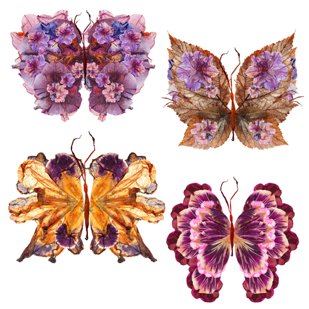 floral butterfly made bizarre curved extruded dried lily petals pressed Petunia flower Stock Photo