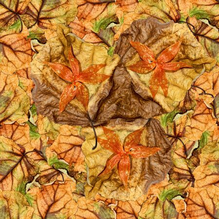 veined: multicolor seamless background pattern texture made of huge crumpled brown with golden and green-veined leaves of poplar with flowers  red physalis