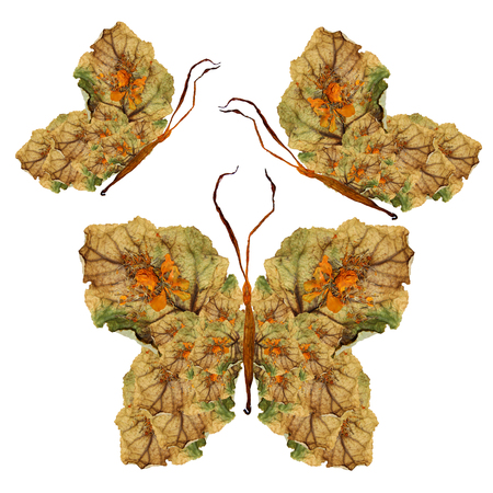 floral butterfly made of  bizarre curved lily petals pressed dry leaves and  flowers
