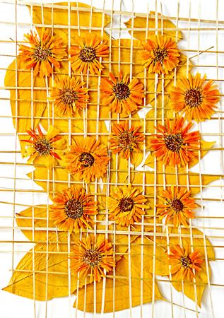 Bright yellow multicolor pressed decorative leaves and chrysanthemum flowers under the grate of straw oil draw painting, photo manipulation