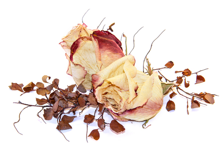 moulder: multicolor dry delicate flowers, leaves and petals of pink rose on white background