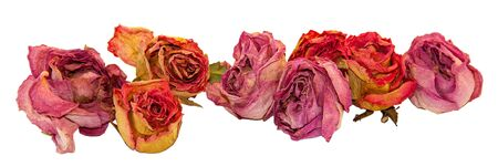 multicolor dry delicate flowers, leaves and petals of pink rose on white background