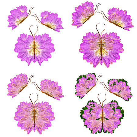floral butterfly made of  bizarre curved lily petals pressed dry green leaves Stock Photo