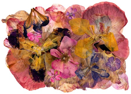 motley multicolored applique of dried pressed iris flowers