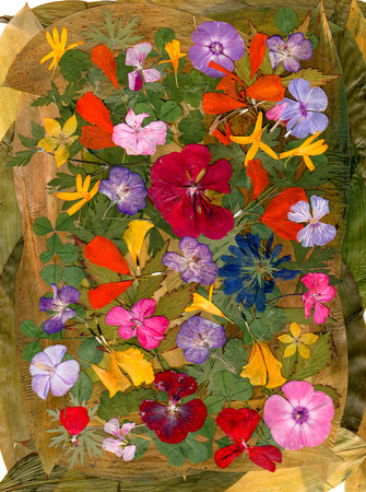 motley multicolored applique of dried pressed flowers