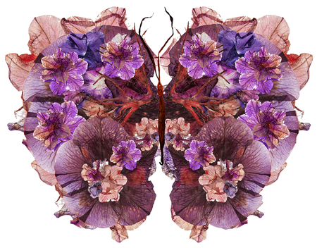 floral butterfly made bizarre curved extruded dried lily petals pressed Petunia flower Reklamní fotografie