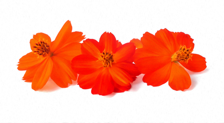 Light tender air petals flew around purslane delicate red flowersl on white background, photo manipulation