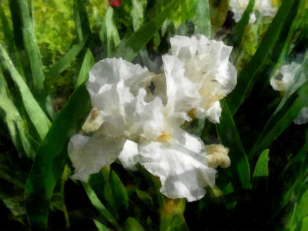 fresh bloom iris white delicate flowers and petals in grass outdoor Stock Photo