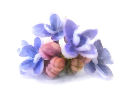 blue lilac oil draw perspective, paint fresh delicate flowers and petals, isolated on white background