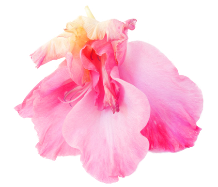 Gladiolus flower isolated on white digital painting Stock Photo