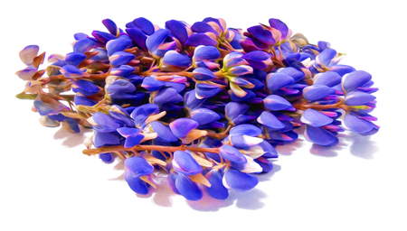 lupine, Herbaceous plant with bright purple red pink or blue flowers, digital painting