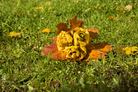 to drown: autumn park, bouquet of roses made from fallen maple leaves, on green grass lies hoarfrost. The dawn, the suns rays, are drowning the snow. Last warm days.