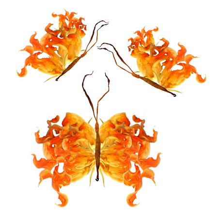 vista: floral butterfly made from bizarre curved extruded fried zucchini flowers isolated Stock Photo
