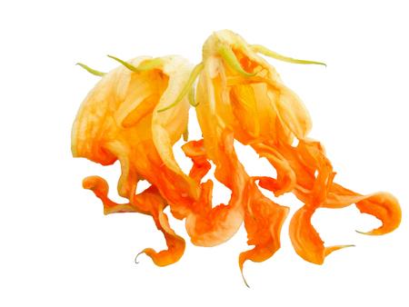 fried zucchini flowers isolated photo manipulation, digital painting Banco de Imagens