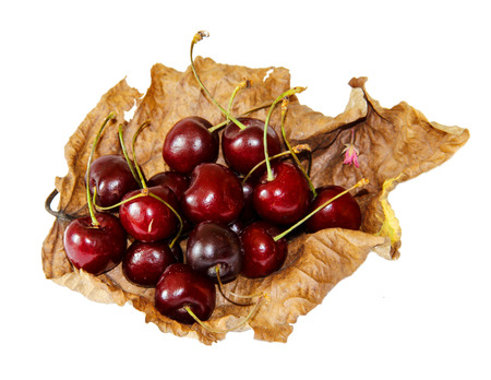 on a dried withered twisted sheet of poplar laid a handful of ripe juicy bard cherry