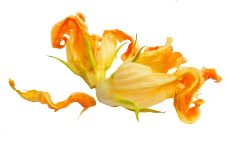 fried zucchini flowers isolated photo manipulation, digital painting Imagens