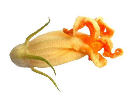 fried zucchini flowers isolated photo manipulation, digital painting Stock Photo