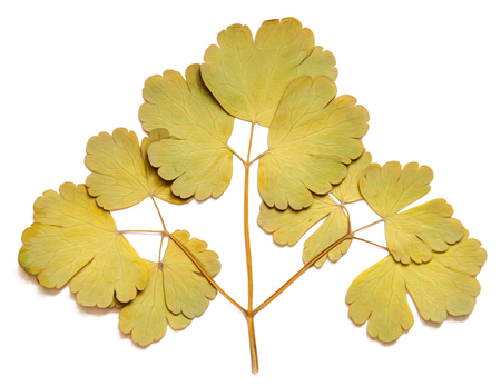 autumnal dry  leaves isolated, photo manipulation