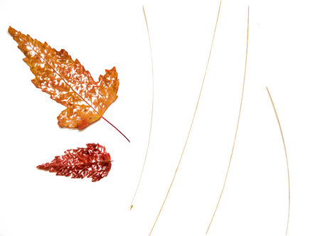 Oil draw illustration of set dry pressed scattered skeletonized leaf of red barberry, maple, poplar branch tree, isolated with shadow. Photo manipulation Фото со стока - 92349841