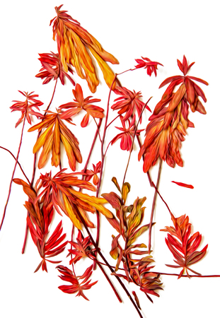 Oil draw illustration of set dry pressed scattered plants with descended, dangling orange leaves, isolated with shadow. Photo manipulation