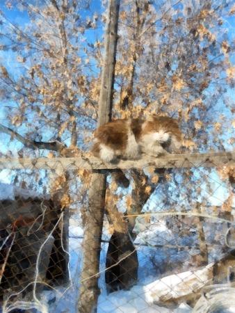 冬の晴れた日、雪に覆われた素朴な庭園と田舎の風景。木の枝を凍らせた。フェンスの上の猫は、プロパティを検査します。写真操作イラスト 写真素材