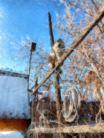 冬クリア日素朴な庭園と田園風景は、雪で覆われて。木の枝を冷凍。塀の上の猫は、プロパティを検査します。写真の操作図 写真素材