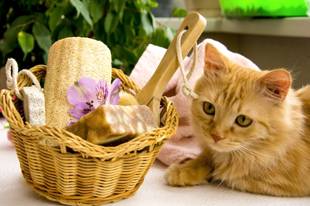 red cat near a basket for bathroom, pumice, luff,  alstroemeria flower, body brush, shells, handmade soap with the addition of sand for heels