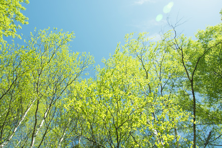 spring panorama of a scenic forest of trees with fresh green leaves and the sun casting its rays of light through the foliage Stock Photo