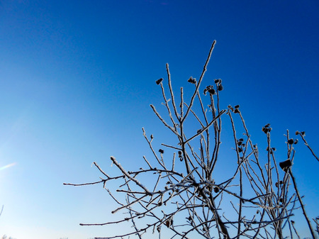 A winter clear day, a rural landscape with a rustic garden covered with snow. frozen branches of trees  in rime against blue sky
